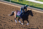 November 3, 2020: Casa Creed, trained by trainer William I. Mott, exercises in preparation for the Breeders' Cup Mile at Keeneland Racetrack in Lexington, Kentucky on November 3, 2020. John Voorhees/Eclipse Sportswire/Breeders Cup/CSM