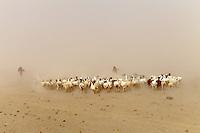 sand and salt storm in Danakil depression Ethiopia