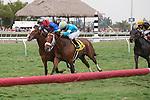 March 29, 2014: Hey Leroy ridden by Alex Solis wins the Appleton(G3T) on Florida Derby Day at Gulfstream Park in Hallandale Beach (FL). Arron Haggart/ESW/CSM