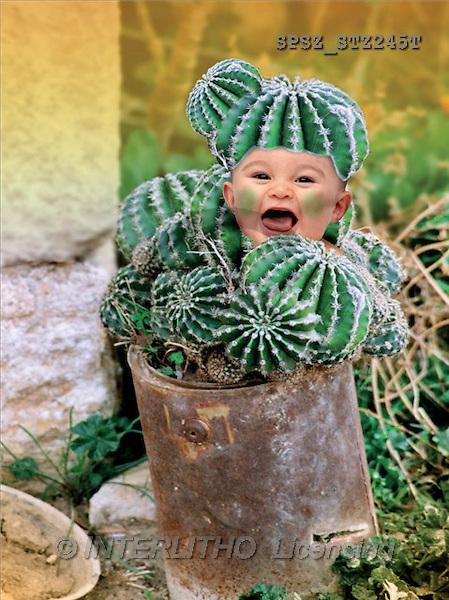 Jose, BABIES, photos(SPSZSTZ245T,#B#) bébé