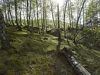 FOREST_LOCATION_90033