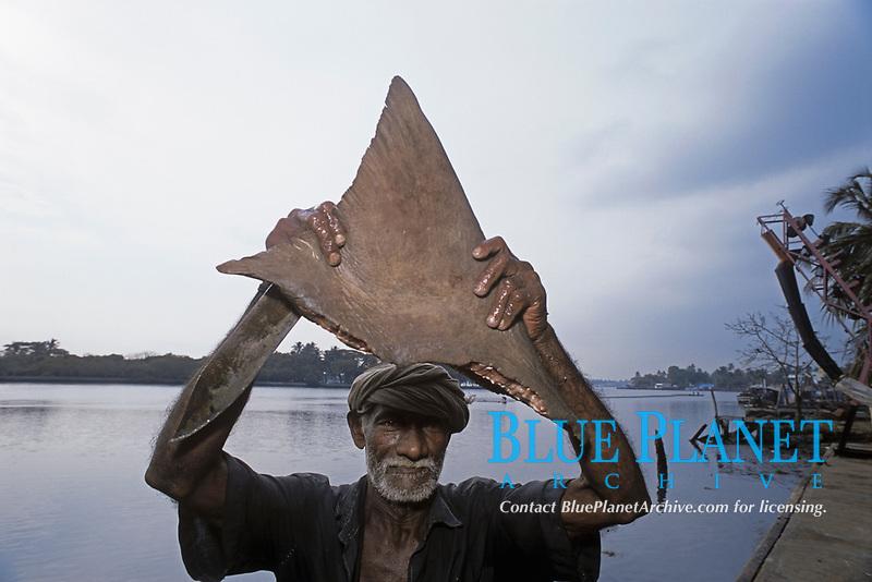 Freshly cut shark fin held up by fisherman. Cochin, India