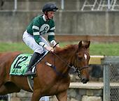 Darren Nagle for The Irish Field