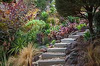 Stepping stair path through California summer-dry garden; Tiburon Hillside Garden