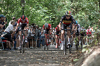 Belgian Champion Yves Lampaert (BEL/Quick Step Floors) and Tim Wellens (BEL/Lotto Soudal) leading the peloton over the cobbles of the infamous Kapelmuur. <br /> <br /> Binckbank Tour 2018 (UCI World Tour)<br /> Stage 7: Lac de l'eau d'heure (BE) - Geraardsbergen (BE) 212.7km