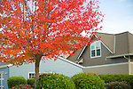 Tree in Autumn by Blue Home