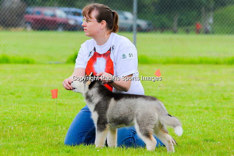 Silver Falls Kennel Club Fun Match