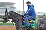 RIYADH, SA February 19 2021: SLEEPY EYES TODD (USA) Track work from King Abddulaziz Racetrack, Riyadh, Saudi Arabia. Shamela Hanley/Eclipse Sportswire/CSM