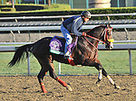 Trinniberg, trained by Shivananda Parbhoo,exercises in preparation for the upcoming Breeders Cup at Santa Anita Park on October 30, 2012.