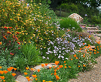 Colorful deer proof, drought tolerant flower garden on hill including California native plants with gravel path, Torgovitsky; Orange flower sticky Monkey Flower (Mimulus aurantiacus)