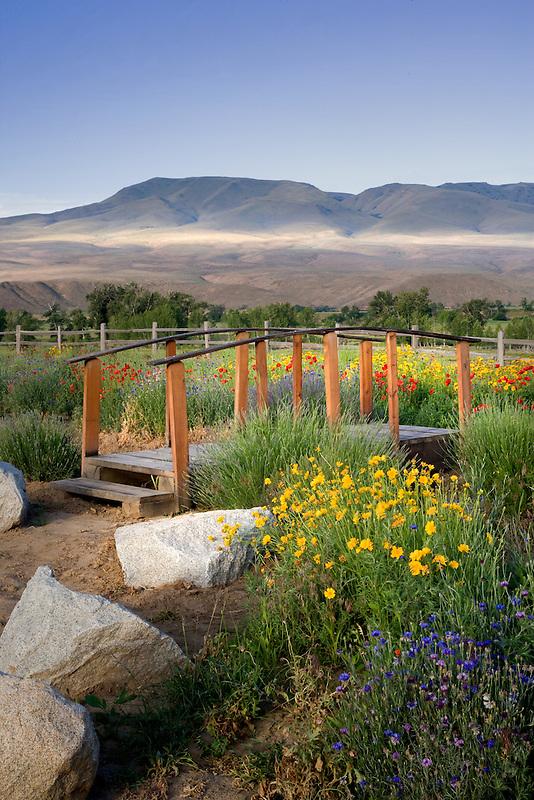 Wildflowers and bridge. Richland Wildflower Project. Richland, Oregon