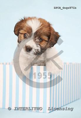 Xavier, ANIMALS, dogs, photos+++++,SPCHDOGS871B,#a# Hunde, perros