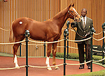 Hip 69 Tapit - Mother Russia colt consigned by Romans Racing & Sales sold for $130,000..November 06, 2012.
