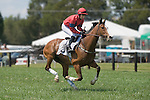 25 Apr 2009: Westfield Dancer, ridden by  Richard Spate, canters to the start of the Grover Vandevender Memorial maiden timber race at the Foxfield Races in Charlottesville, Virginia. Westfield Dancer is owned by Lucy Horner and trained by Barbara McWade.
