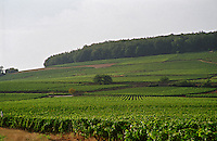 The Corton hill with the famous Le Corton vineyard just below the forest and Clos du Roi and Les Bressandes below