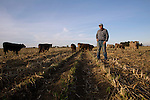 My dad recently sold most of the cattle on his northern California farm and is going to see if he can make a successful business with a smaller herd, around 60.