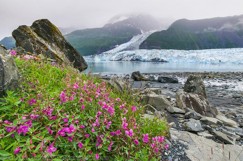 Dwarf fireweed, cascade and Barry tidewater glaciers in Barry Arm, Prince William Sound, Alaska