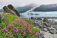 Dwarf fireweed, cascade and Barry tidewater glaciers in Barry Arm, Prince William Sound, Alaska