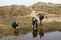 Volunteers surveying for tadpoles and spawn of the Natterjack Toad (Epidalea calamita) in pond in a dune slack, Ainsdale Nature Reserve, Merseyside, UK. May. Photographer: Alex Hyde