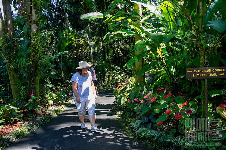 Tourists walk through the Anthurium Corner at Hawaii Tropical Botanical Garden, Papa'ikou, Big Island of Hawaiʻi.