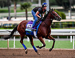 Oscar Performance, owned by American Racing, LLC and trained by Brian A. Lynch, exercises in preparation for the Breeders' Cup Juvenile Turf