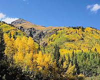 Fall Color in Colorado, Golden Aspens