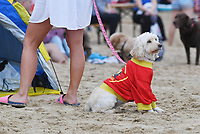 BNPS.co.uk (01202 558833)<br /> Pic: ZacharyCulpin/BNPS<br /> <br /> Pictured: A dog with a 'Baywatch' shirt keeps a eye over proceedings.<br /> <br /> Putting their best paw forward hoping to ride the wave of success - Competitors and their dogs take part in the annual Dog Surfing championships.<br /> <br /> The event known as The 'dogmasters' took place today on Bournemouth beach in front of packed crowd, it's the country's only dog surfing and paddleboard championship.