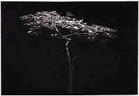 This is a Platinum Palladium print on Velum over silver leaf.<br /> Image size 23 x 16 cm