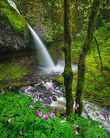 Spring's wildflowers frame this iconic falls in Oregon's Columbia Gorge.
