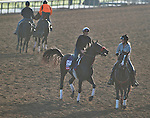 October 27, 2014:  Big Macher, trained by Richard Baltas, exercises in preparation for the Breeders' Cup Xpressbet Sprint at Santa Anita Race Course in Arcadia, California on October 27, 2014. Scott Serio/ESW/CSM