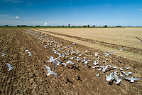 Seagulls - Lincolnshire, September