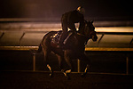 October 31, 2020: Venetian Harbor, trained by trainer Richard Baltas, exercises in preparation for the Breeders' Cup Filly & Mare Sprint at Keeneland Racetrack in Lexington, Kentucky on October 31, 2020. Alex Evers/Eclipse Sportswire/Breeders Cup