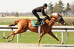 01 April 2010.  Hip #9 Speightstown filly.