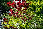 5.1.17 - Layers of Green and Red...