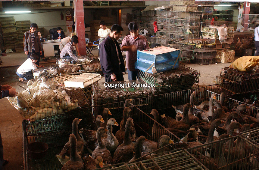 "Geese, ducks and wild birds are stacked in cages for sale at Lo Chun Wai (wild Animal Food) Market on the outskirts of Guangzhou, Guangdong Province, South China in this file photo. China's wild animal markets, where live wild animals and reared animals are sold are the source of many viruses that mutate as they ""jump"" from animals to humans. The coronavirus COVID-19 is thought to have originated in an animal market in China. <br /> By Sinopix Photo Agency"
