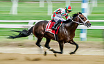 June 4, 2021: Firenze Fire #1, ridden Jose Ortiz, wins the True North Stakes during Friday at the Belmont Stakes Festival at Belmont Park in Elmont, New York. Scott Serio/Eclipse Sportswire/CSM