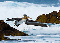 """OCEAN AVIATOR""<br />
