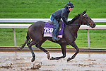 October 28, 2015 :   Right There, trained by J. Keith Desormeaux and owned by Big Chief Racing LLC, exercises in preparation for the The 14 Hands Winery Breeders' Cup Juvenile Fillies at Keeneland Race Track in Lexington, Kentucky on October 28, 2015. Scott Serio/ESW/CSM