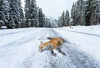 Yellowstone Fall 2020