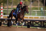 OCT 28: Breeders' Cup Juvenile  entrant Dennis' Moment, trained by Dale L. Romans, at Santa Anita Park in Arcadia, California on Oct 28, 2019. Evers/Eclipse Sportswire/Breeders' Cup