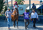 January 23, 2021:  #10 Stage Raider with jockey Jose L Ortiz on board, places in his race at Gulfstream Park in Hallandale Beach, Florida.  Liz Lamont/Eclipse Sportswire/CSM