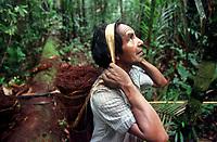 """Índio Werekena morador da comunidade de Anamoim no alto rio Xié carrega um fardo chamado de """" piraíba"""" carregado de fibras de piaçaba(Leopoldínia píassaba Wall). A fibra , um dos principais produtos geradores de renda na região sendo coletada de forma rudimentar. Até hoje é utilizada na fabricação de cordas para embarcações, chapéus, artesanato e principalmente vassouras, que são vendidas em várias regiões do país.<br />Alto rio Xié, fronteira do Brasil com a Venezuela a cerca de 1.000Km oeste de Manaus.<br />06/06/2002.<br />Foto: Paulo Santos/Interfoto Expedição Werekena do Xié<br /> <br /> Os índios Baré e Werekena (ou Warekena) vivem principalmente ao longo do Rio Xié e alto curso do Rio Negro, para onde grande parte deles migrou compulsoriamente em razão do contato com os não-índios, cuja história foi marcada pela violência e a exploração do trabalho extrativista. Oriundos da família lingüística aruak, hoje falam uma língua franca, o nheengatu, difundida pelos carmelitas no período colonial. Integram a área cultural conhecida como Noroeste Amazônico. (ISA)"""
