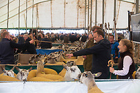 Kelso Ram Sale 2018<br /> ©Tim Scrivener Photographer 07850 303986<br />      ....Covering Agriculture In The UK....