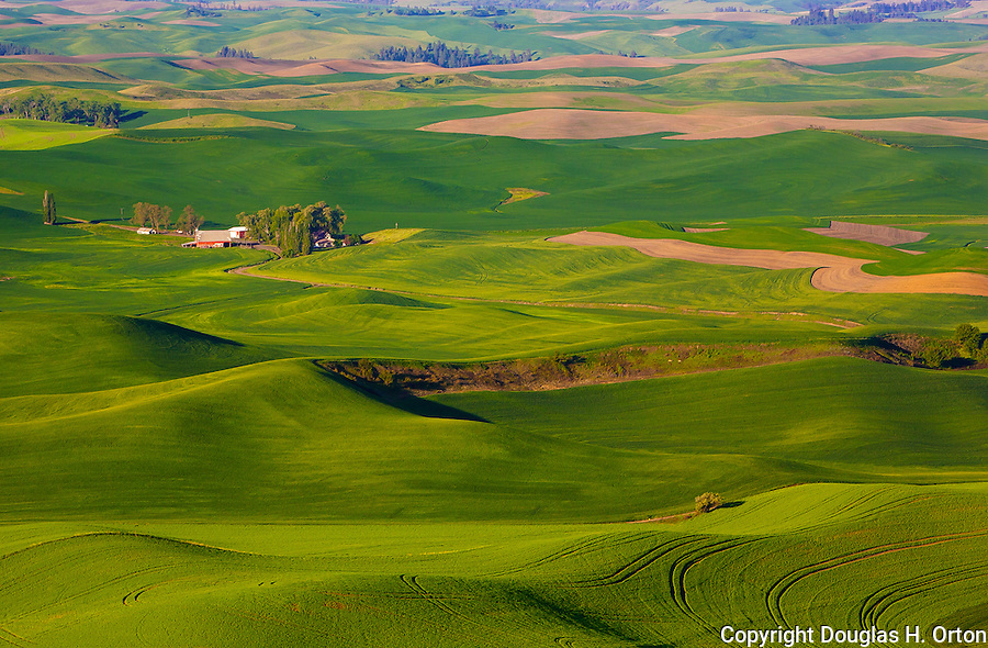 Please contact the photographer regarding licensing this image. Steptoe Butte stands tall above the Palouse in Washington State.  Steptoe Butte is a quartzite island jutting up from sediment left by the ice age Missoula flood that formed the Palouse.   Cow Parsnip often flanks bordering roads in spring.