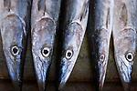 Seychelles, Island Mahe, capital Victoria: Sir Selwyn Selwyn-Clarke Market - fish market, barracudas
