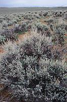 Sagebrush shrub-steppe habitat. Freemont County, Wyoming. April.