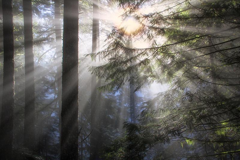 Sunburst through forest in Oregon