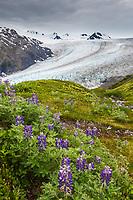 Scenic along the Harding Ice Field trail, Kenai Fjords National Park, Kenai Peninsula, Alaska.