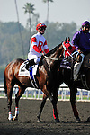 7 November 2009:  Furthest Land with Julian Leparoux up in the post parade before the $1 Million Breeder's Cup Dirt Mile at Oak Tree at Santa Anita in Arcadia California.