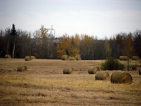 Farmer's field are filled with harvest hay bales in the fall months.